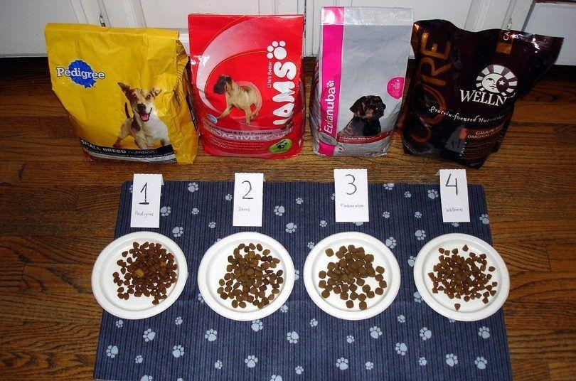 experimento de comida para perros