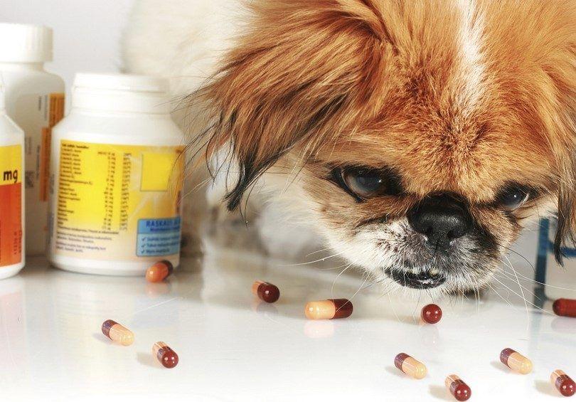 medicamentos para el dolor para perros
