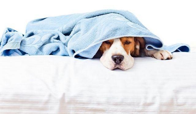 ¿Qué puedo dar a mi perro para el dolor?
