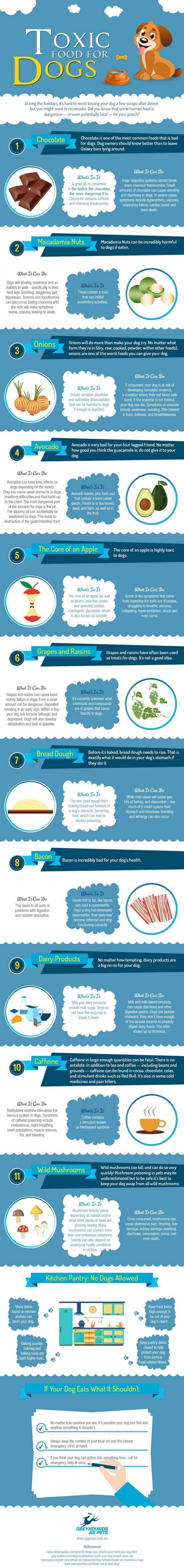 alimentos tóxicos para su perro