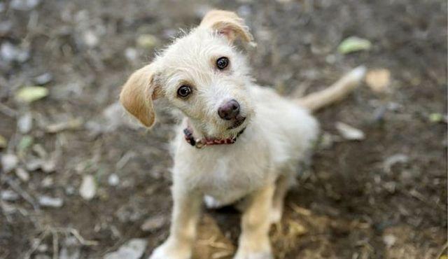¿Qué los perros ven? La vida a través de los ojos de su perro