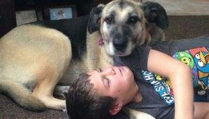 Lo que impulsa a la gente a los perros de veneno?
