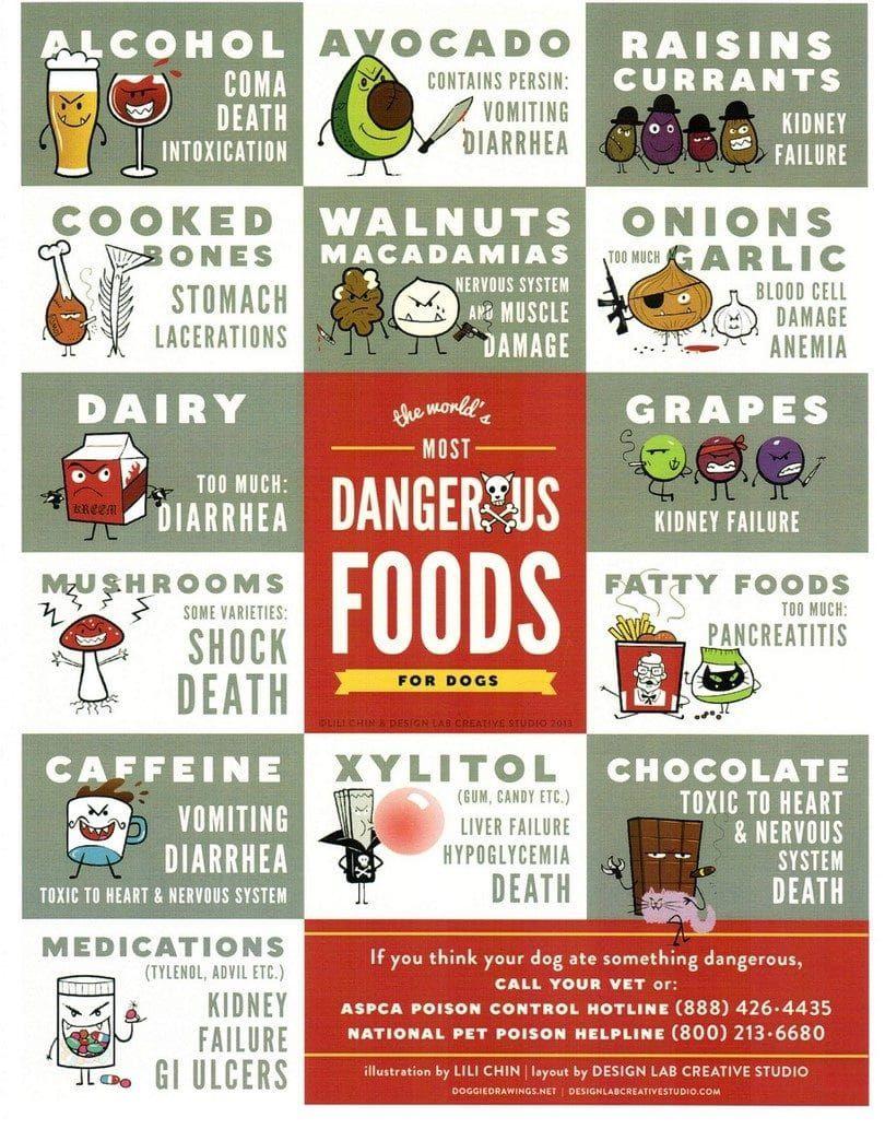 Alimentos peligrosos para los perros
