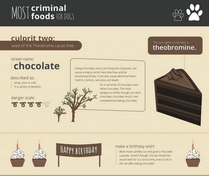 Chocolate tóxico para los perros