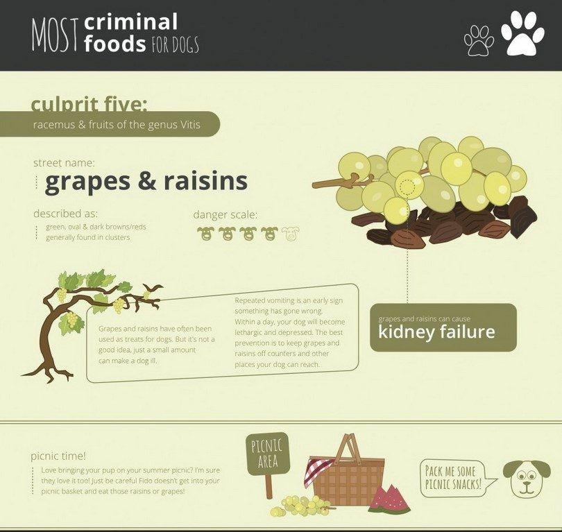 Grape tóxico para los perros