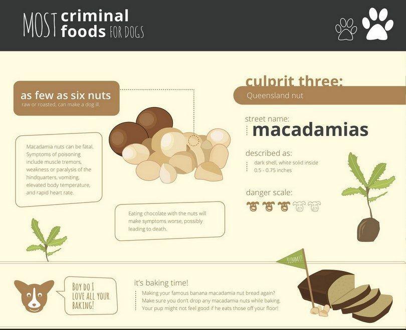 macadamia Healthypaws