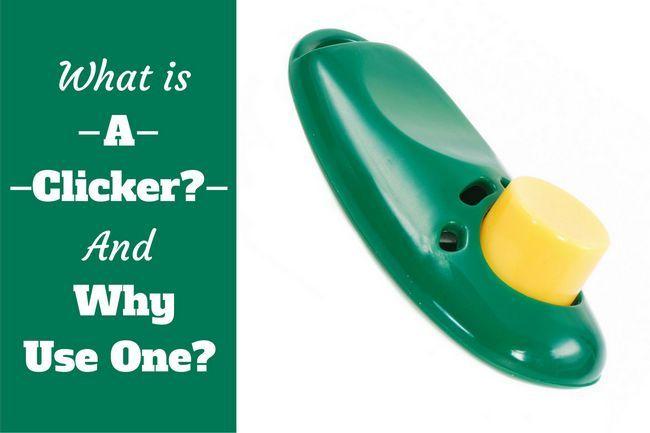 ¿Qué es un clicker y por qué utilizar uno escrito al lado de un clicker verde en BG blanca