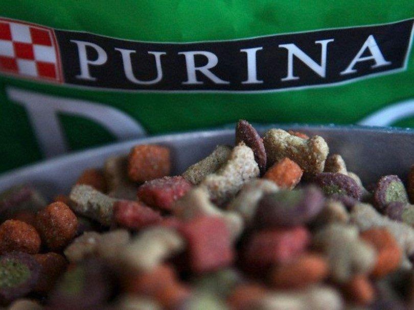 comida para perros Purina