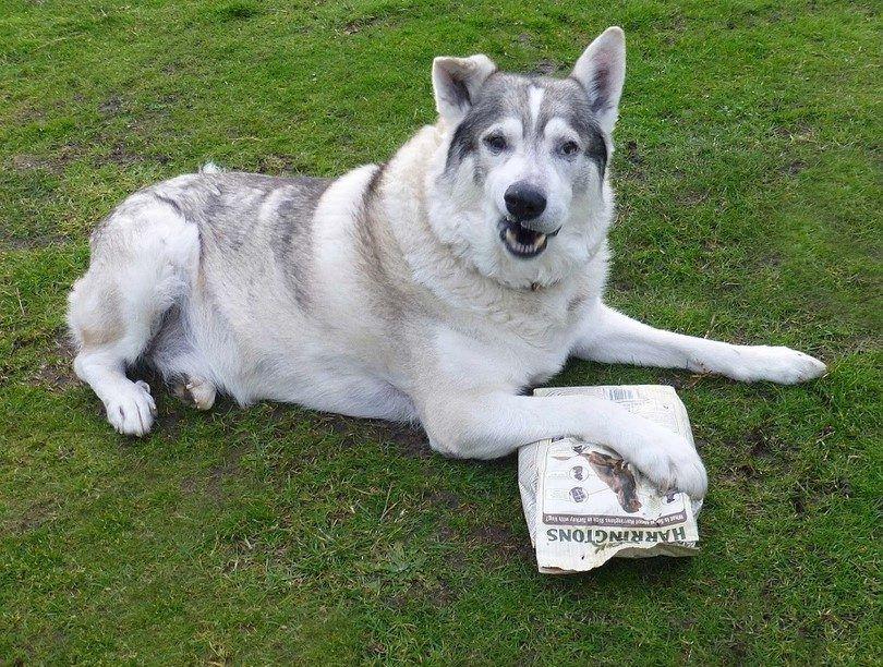 Perro quiere comida