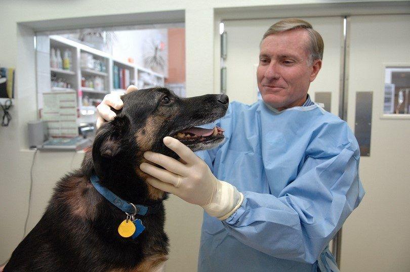 Perro en el dentista