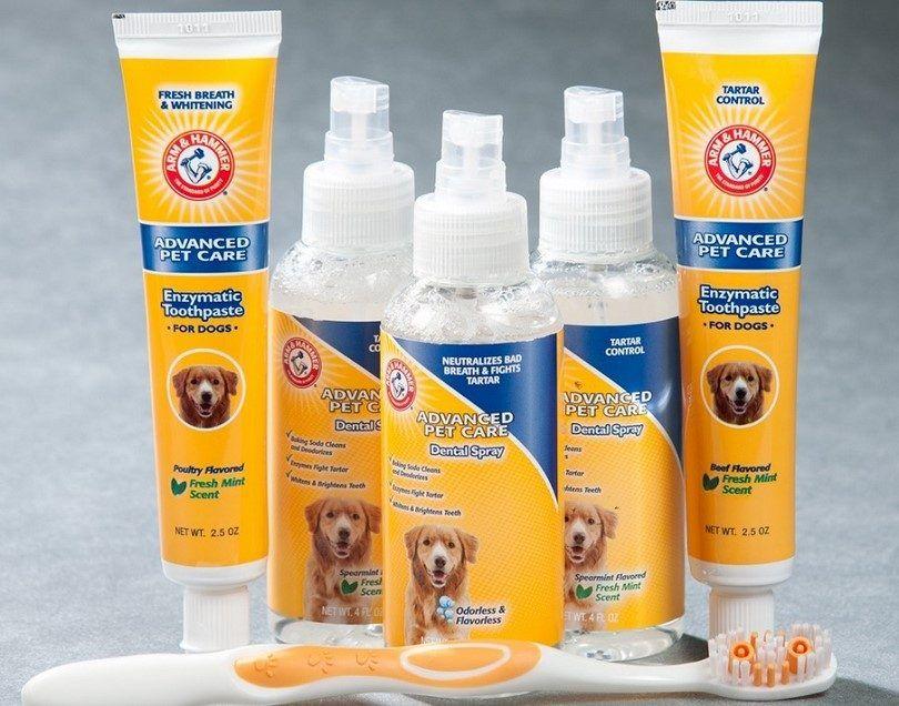 pasta de dientes de perro