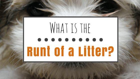 ¿Cuál es el más pequeño de una camada?