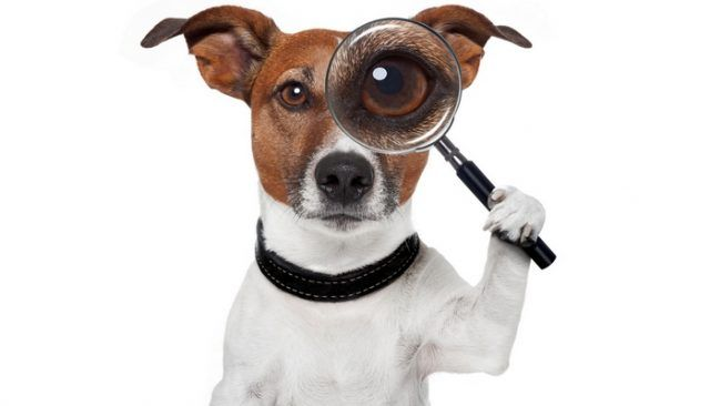 ¿Qué es esto `detective de mascotas