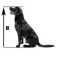 ¿Qué tamaño de caja de perro medición de la altura