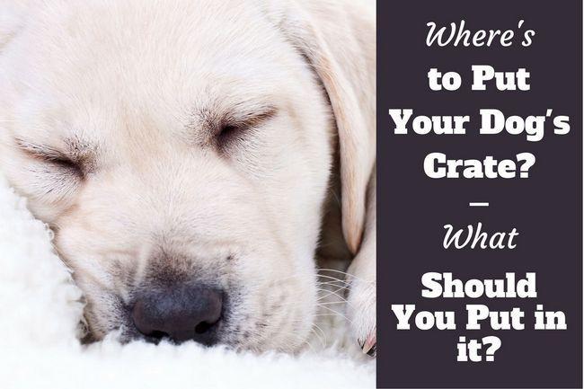 qué poner en una caja de perro - un cachorro de relax en una manta suave