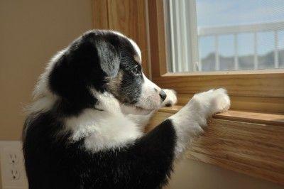 ¿Qué pasaría con su perro, si algo te ha pasado?