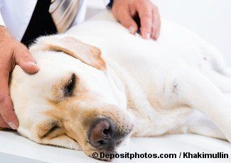 Labrador de haber sido afectado