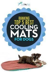 Esteras de refrigeración superior mejor perro