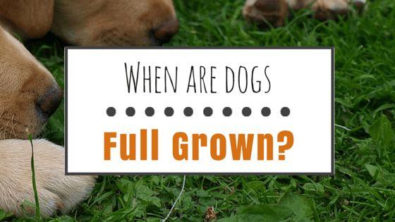 Cuando se cultivan perros completo?