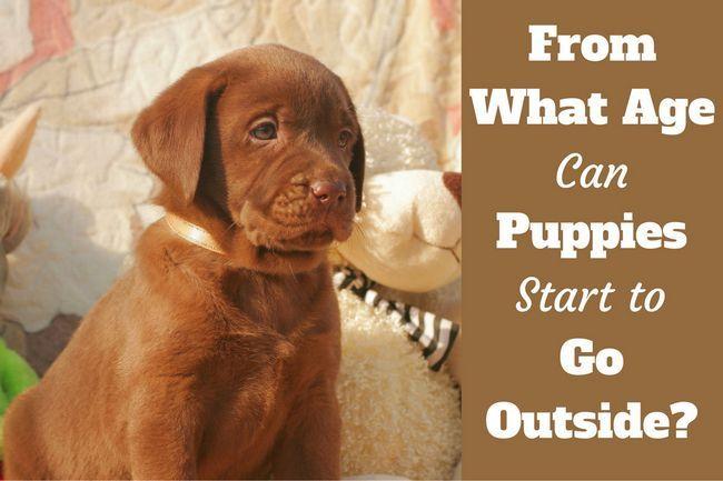 Cuando los cachorros pueden salir a la calle? Después de la vacunación? A cierta edad?