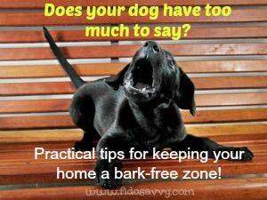 Cuando los ladridos del perro se convierte en un problema ....