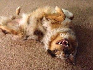 Cuando vallas de perros son absolutamente necesarias