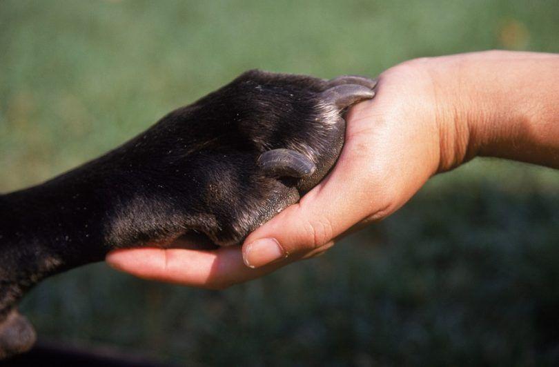 Cuando a poner a su perro hacia abajo: ¿es realmente el tiempo?