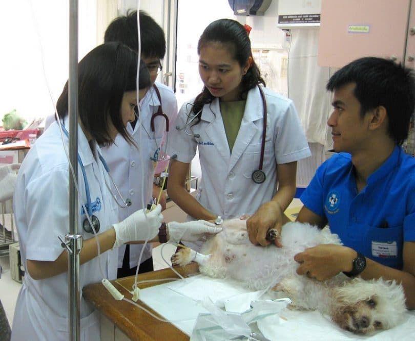 Perro en el veterinario - la eutanasia