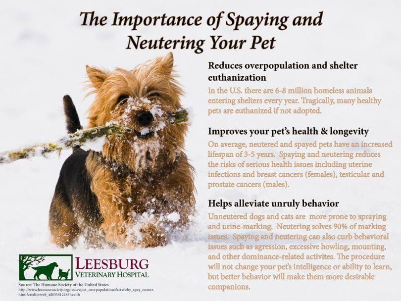 Importancia de la esterilización y castración de su cachorro