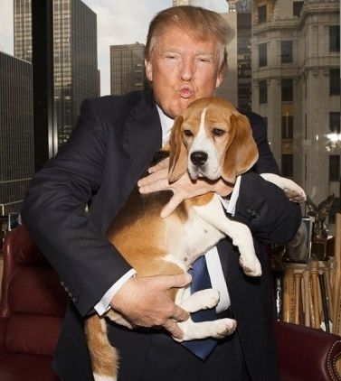 ВїDГіnde estГЎn los candidatos presidenciales de 2016 sobre los derechos y el bienestar de los animales?