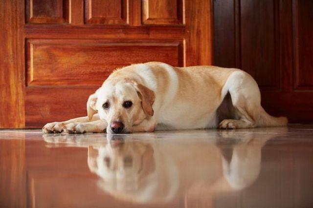 Que mantiene al perro en un divorcio?