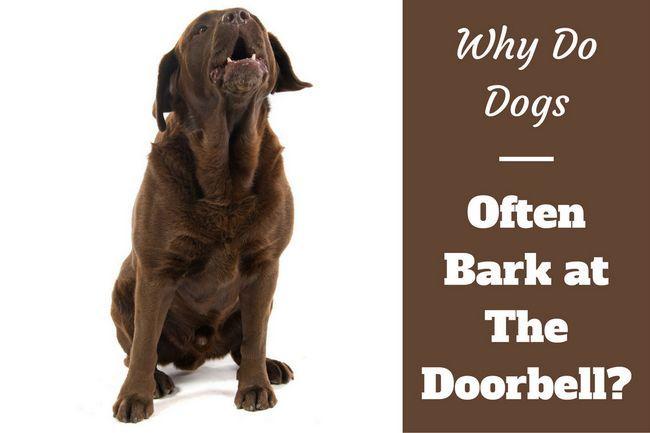 ¿Por qué los perros ladran a la puerta?