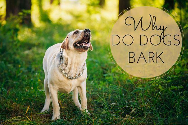 ¿Por qué ladran los perros? ¿Cuáles son las causas?