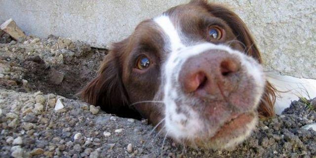 ¿Por qué los perros comen tierra? La ciencia detrás de una manía
