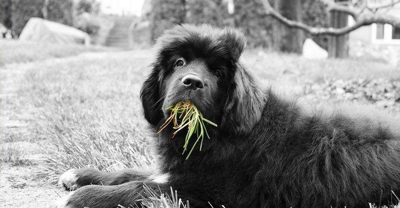 Comiendo hierba con orgullo