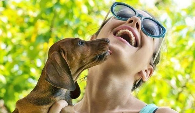 ¿Por qué los perros se lamen? Un consejo: no se trata sólo porque te quieren