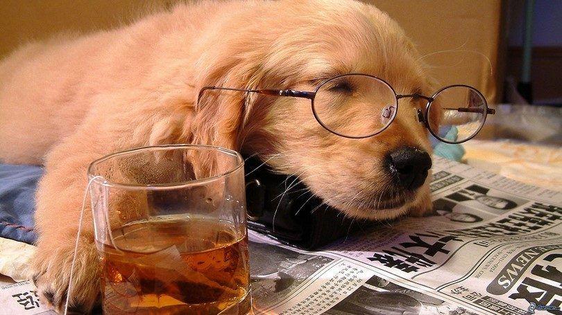 Perro el dormir con té