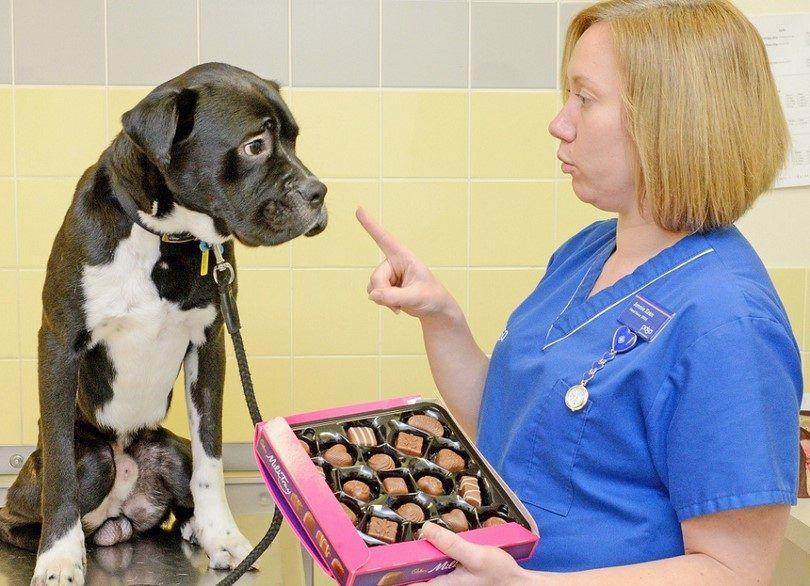 Perro y chocolate- gran NO