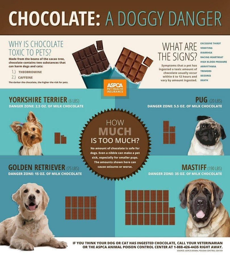 Un chocolate doggy peligro