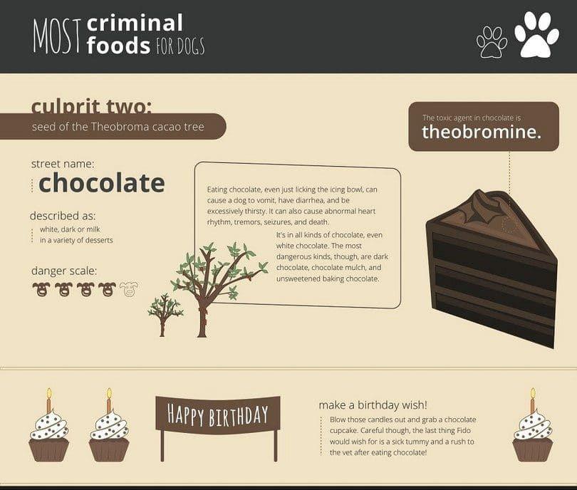 Teobromina y chocolate