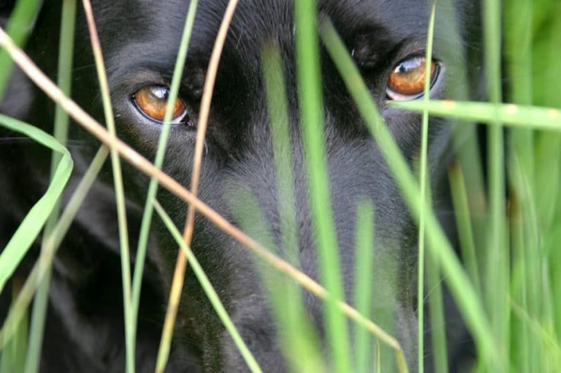 Perro y la hierba