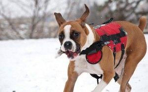 ВїPor quГ© el perro Los padres tienen que invertir en chalecos para perros