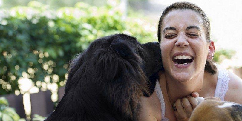 ¿Por qué los perros lamen: entender lo que fido está tratando de decir
