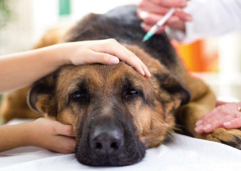 La vacunaciГіn de perros