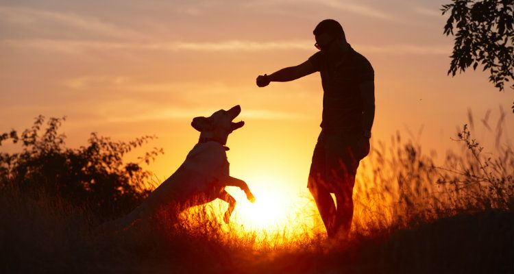 ¿Por qué algunos perros les disgusta hombres y qué hacer al respecto?