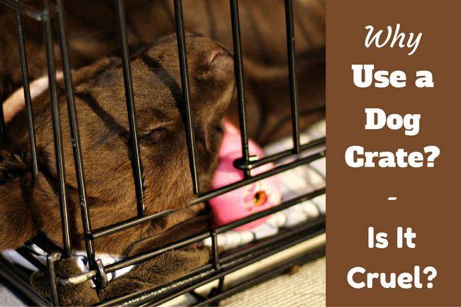 ¿Por qué utilizar una caja de perro - y es cruel con cajón de un perro?