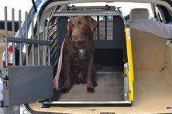 ¿por qué utilizar una caja de perro - un Labrador en una caja de viaje de coche, mucho más seguro!