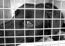Es cruel con cajón de un perro - Una cabeza abs negro visto a través de una pared de la canasta