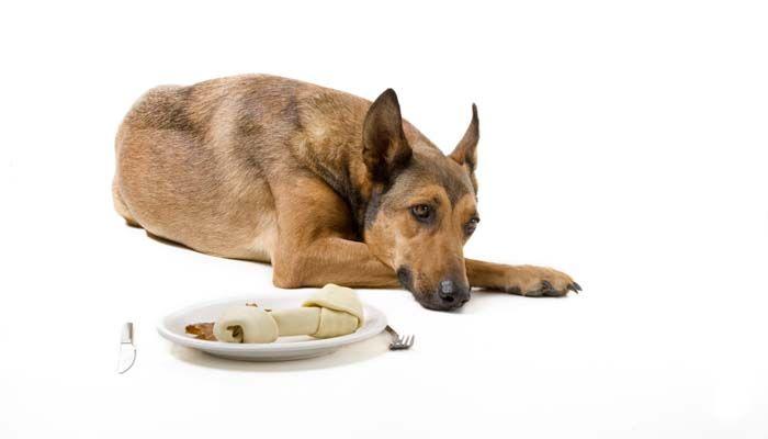 ¿Por qué no va a comer a mi perro? He aquí por qué los perros pueden rechazar los alimentos