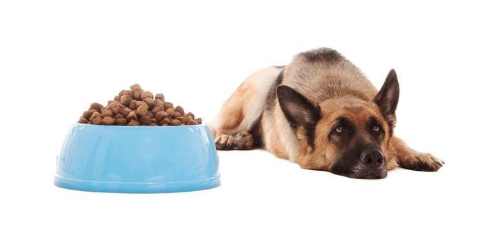 ¿Por qué mi costumbre Dog Eat - aquí es por qué los perros pueden negarse a comer